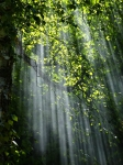 forest-sunbeams-trees-sunlight-70365